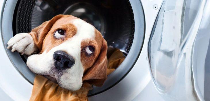 En hund som kikar ut från en tvättmaskin.