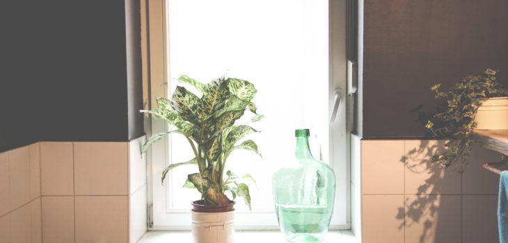 Måla våtrumstapet i badrumet och inred med växter för en snabb uppfräschning