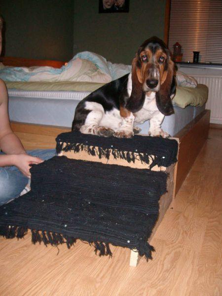 Hunden fick en egen trappa.