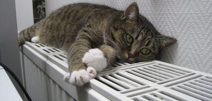 Katt värmer sig ovanpå ett element