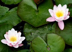 Dammen i trädgården blir vackrare med växter