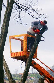 Trädfällning - tips och pris